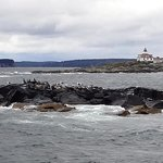 Birds on rocks with an interesting lighthouse in background, seen on Nature Cruise