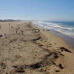 Strand von Pismo Beach