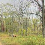 Hiking down a trail