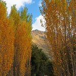 Lakeside walk - autumn poplars