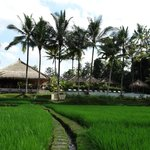 Views from the rice fields towards the resort