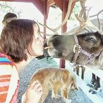 Not every day you get to kiss a reindeer.