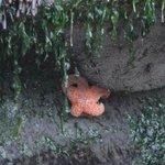 A starfish on the Inn's beach