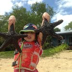 Starfish with fale in background