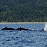 de juillet à novembre passage de baleines devant le lodge