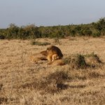 We are just a short drive from numerous game reserves and the incredible Addo Elephant National