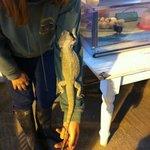 The Hatchery: petting a bearded lizard