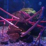 Big Daddy Crab
