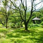The garden area