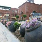 Sarhad blossoms