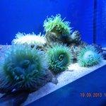 At the Grand Aquarium