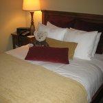 Our teddy bear (Oatmeal) amongst the plush pillows