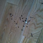The dead flies we swept up on our first afternoon in the cabin