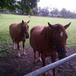 The Garden Gates resident horses...