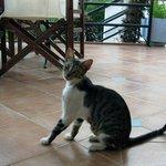 Общительный кот