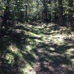 Appalachian Trail in Shenendoah National Park