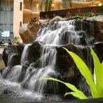 Koi pond in atrium