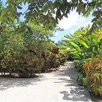 Enchanted walkway garden