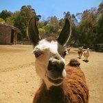 En Mendoza Zoo