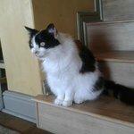 the lovely cat in Dolphin inn