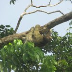 Sloth seen during hotel boat tour