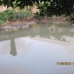 Polluted, smelly water next to hotel