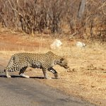 The amazing Leopard we saw!