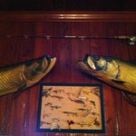massive trophy tarpon on the walls