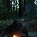 Forest View Fire Pit