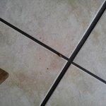 Roach in crack between tiles.