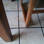 Roach near chair leg.