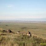 Badlands' Antelope resting