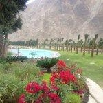 vista hacia la piscina y jardines