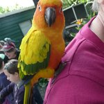 A colourful parrot saying hello.