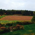 cranberry bog from the deck