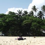 Пляж, за деревьями шоссе