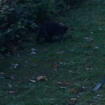 My visitor
