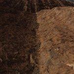 Blick vom Ayers Rock in die Ebene (1982)