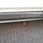 Moth in carpet room
