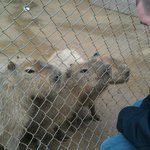 Pacybaras