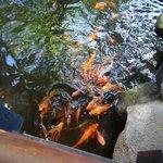 рыбки плавают везде по всему отелю
