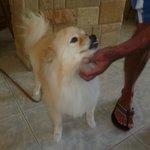 Felix the resident Pomeranian