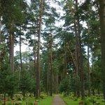 Skogskyrkegården
