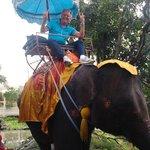 Elefant Tour a 70 Km dall'Hotel