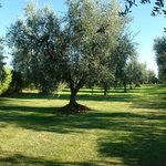 Photo de Agriturismo Giardino Degli Ulivi Hotel Margherita di Savoia