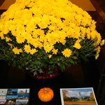Yellow Mums in the Lobby