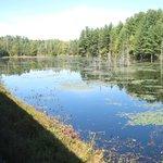 "The ""beaver dam"" lake."