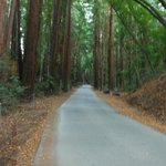 one of the roads in the park