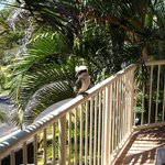 Friendly Kookaburra - private patio (off Living area)