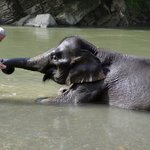 Washing Elephants in Tangkahan